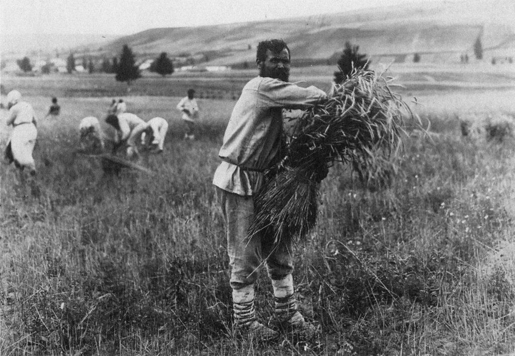 Udmurtilainen sadonkorjaaja tekee viljalyhdettä Sarapulin maakunnassa Vjatkassa.